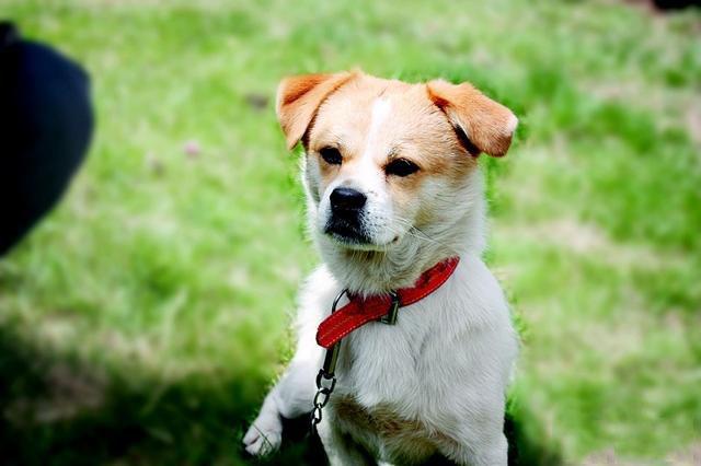 狗狗讨厌的几种行为,你做过吗?
